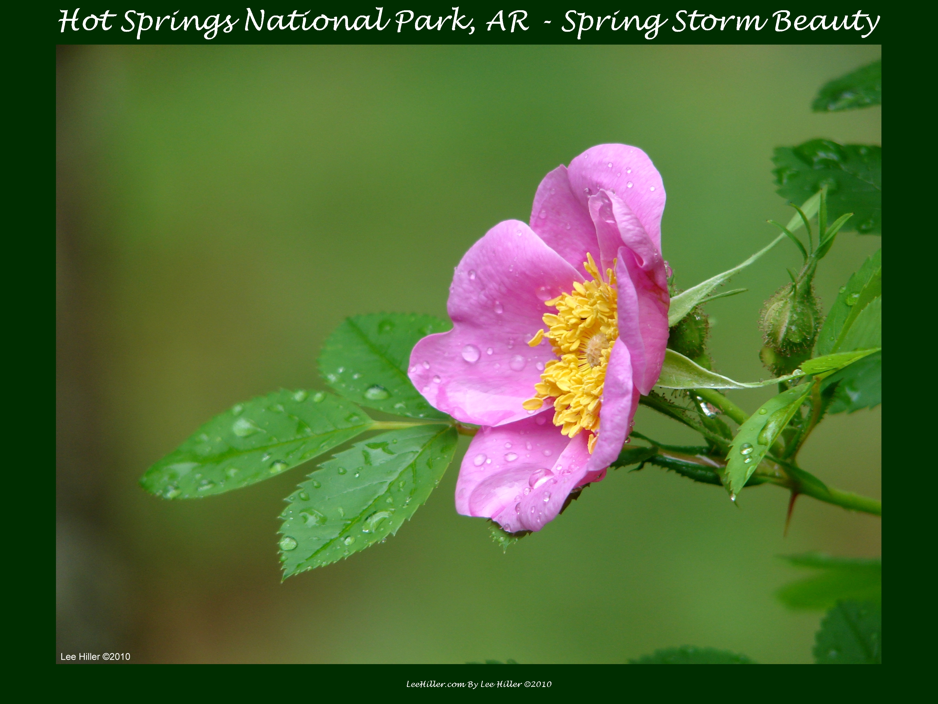 Have a Lovely Nature Break – Wildflowers of Hot Springs National Park