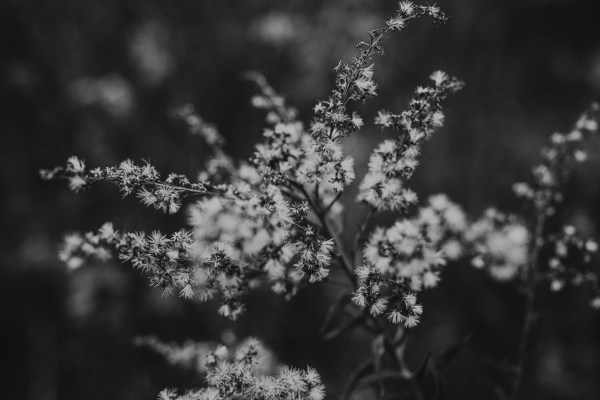black and white floral nature photography art for home