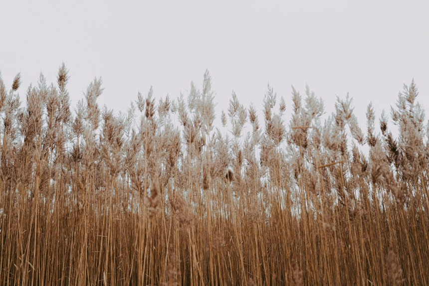tall grass nature photography sky