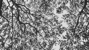 tree design fine art photography black and white
