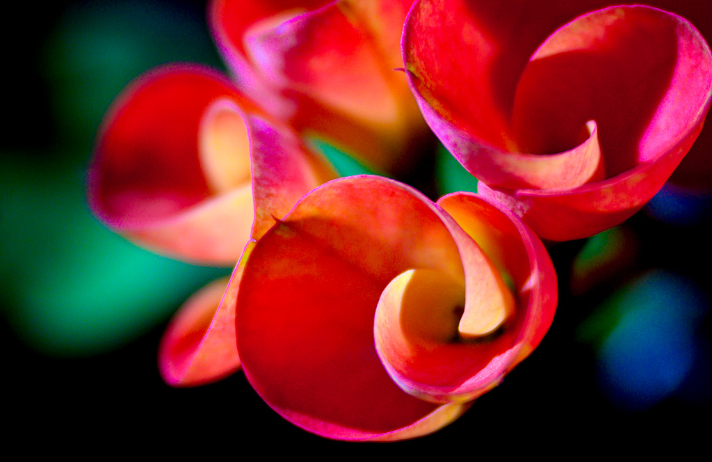 vivid bright colorful flower art