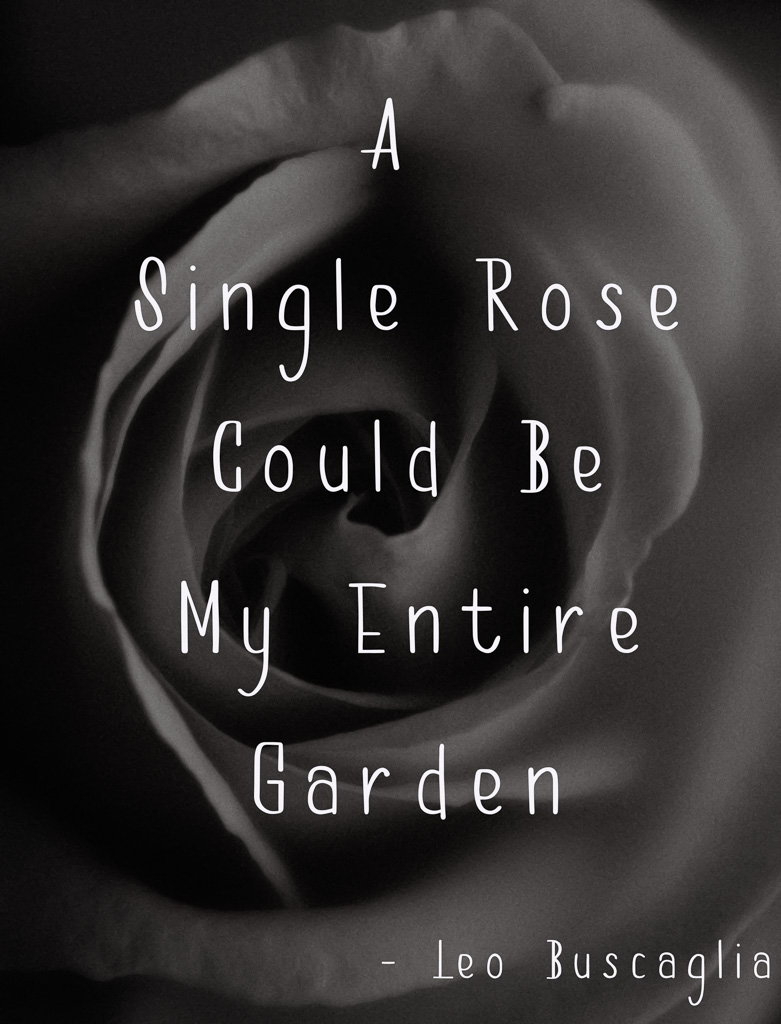 black and white rose fine art flower quote poetry