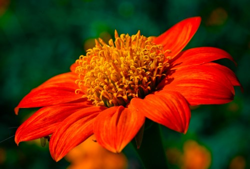 orange flower photography leela moon art