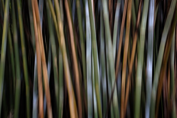 abstract nature photography fine art design