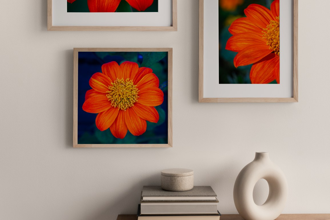 gallery wall flower art photography prints on interior wall
