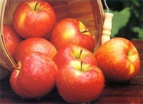 Honey Crisp Apples MSU Extension-Leelanau