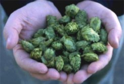 Leelanau Sustainable Hops Production Workshop