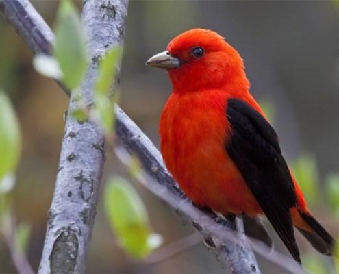 Leelanau Peninsula BirdFest
