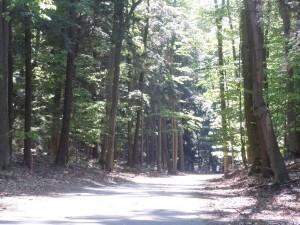 Bikeable Leelanau: Ride down Phase I of the Sleeping Bear Heritage Trail