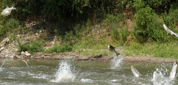 Free seminar on Asian Carp in the Great Lakes Tuesday