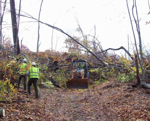 Alligator Hill Trail Clearing Update