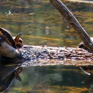 World Turtle Day Stretch