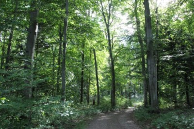Forest Road in Palmer Woods