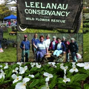Annual Leelanau Wildflower Rescue Sale Memorial Day Weekend!