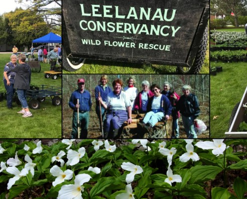 Annual Leelanau Wildflower Rescue Sale Memorial Day Weekend!