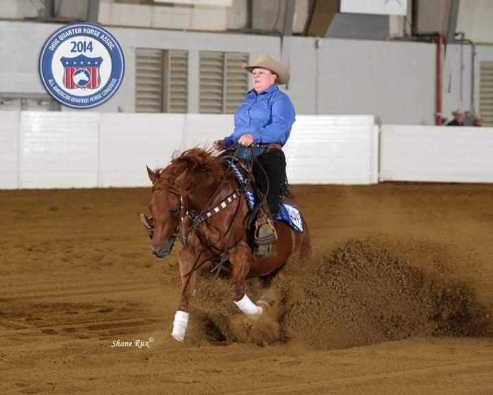 Horses for Sale | Mancini Training Center | Mancini Training