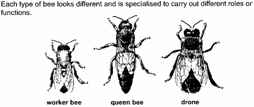 the kinds of bees