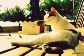 a white and grey cat lounging on a park bench. sunny.