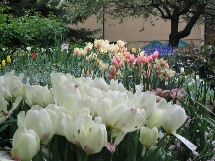 Tulips-Stanford University Hospital