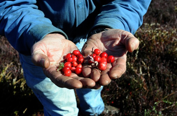 Mullica Township cranberry farm the last of its kind in Atlantic County
