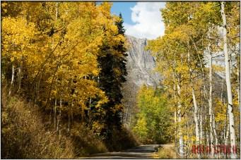 Fall Colors Near Crested Butte, Colorado