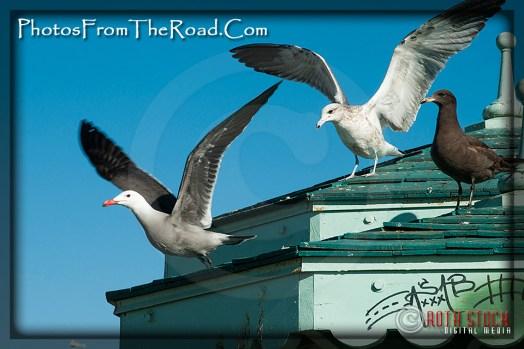 Seagulls at the Venice Beach Boardwalk