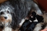bibi en pups