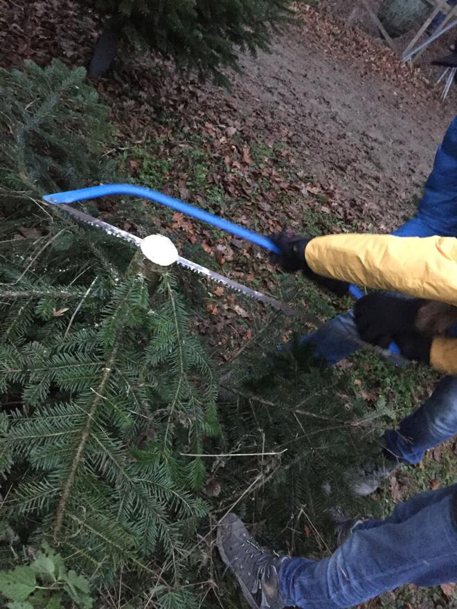 weihnachtsbaum-selber-schlagen-saegen
