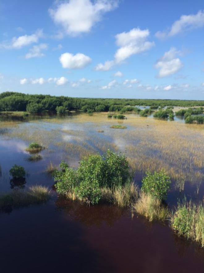 Florida- Everglades