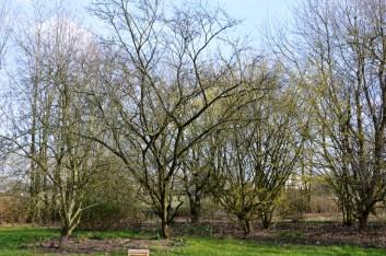 voedselbosje in maart