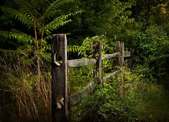 Rail fence and Sumac