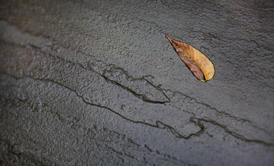 Leaf on wet flagstone