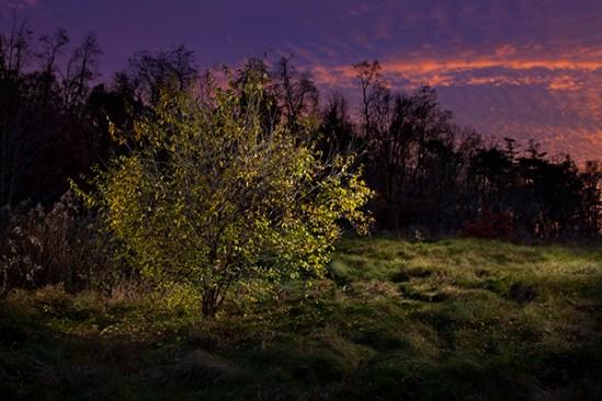 Landis Woods sunset