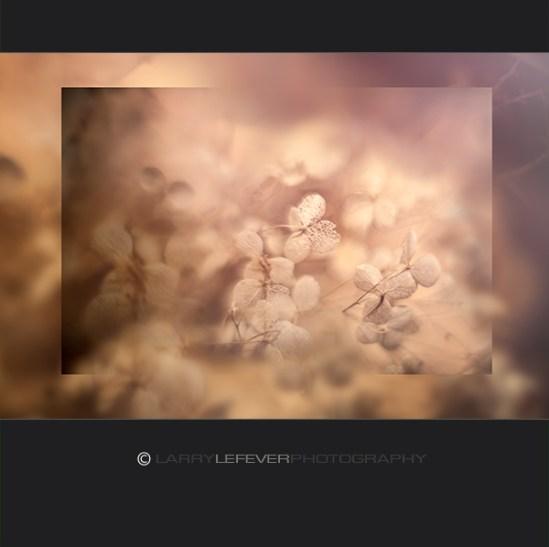 Hydrangea composite