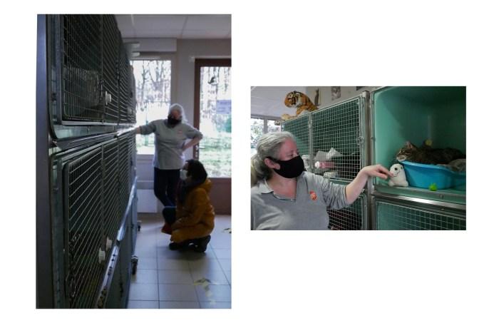 Les prix varient selon l'animal que l'on souhaite adopter : 250 euros sont à prévoir pour un chien, 150 euros pour un chat, et participation libre pour un sauvetage. Ces sommes correspondent à une contribution aux différents soins pris en charge par l'association : stérilisation, vaccination, identification par puces, test du sida du chat, et plus encore. Sophie, chargée d'accueil, explique le déroulé d'une adoption. Photo : Jade Loncle