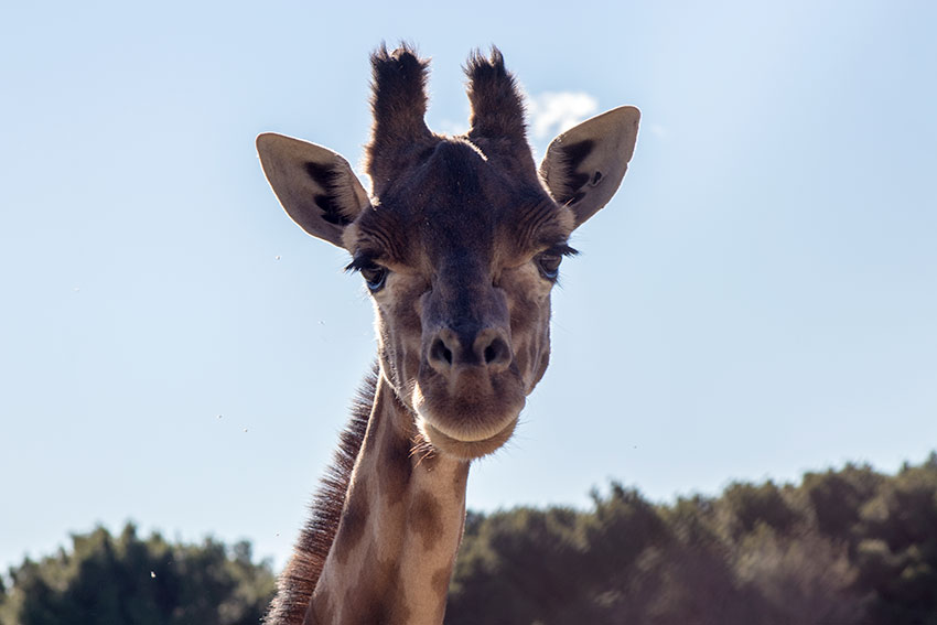 Sigean African Reserve
