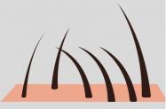 le poil / les poils