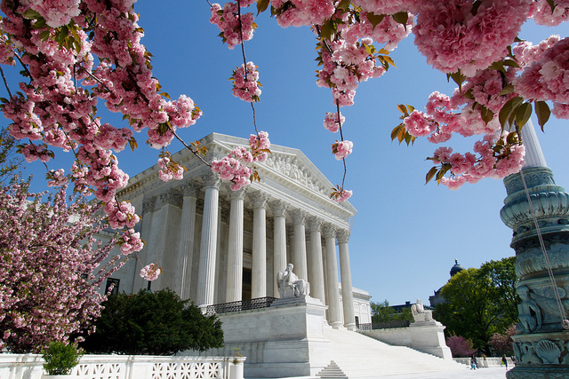 Supreme Court in Bloom - photo by Tim Sackton
