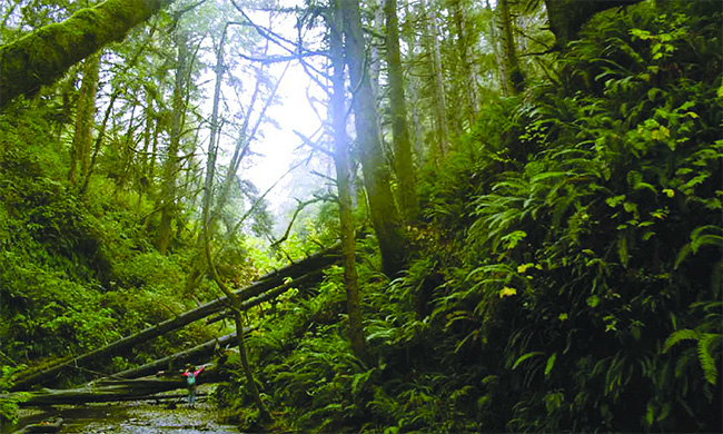 suskin-in-forest-650