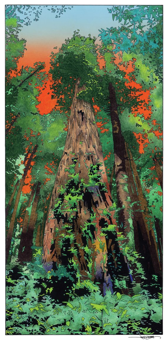 Redwoods by Joshua Koza