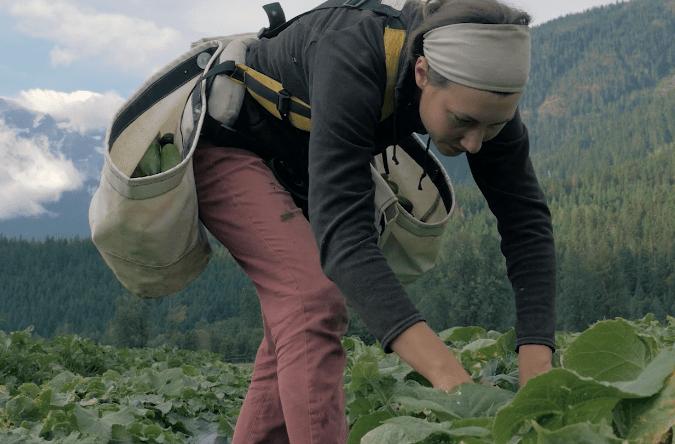 age-of-the-farmer