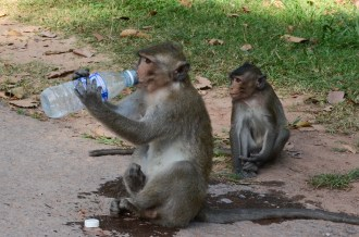 Angkor Wat may be an ancient temple, a symbol of national pride for Cambodia and wonder of the world, but the monkeys stole the show.