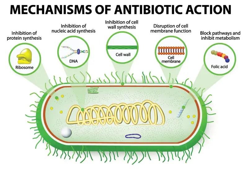 CBD & Antibiotics: Repair Your Body's Good Bacteria After ...