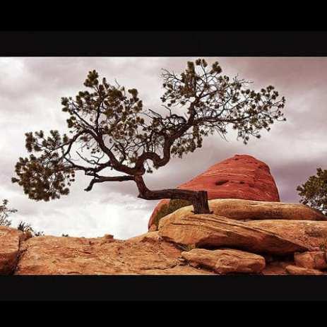Ln_tree (1)