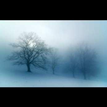 Ln_tree (19)