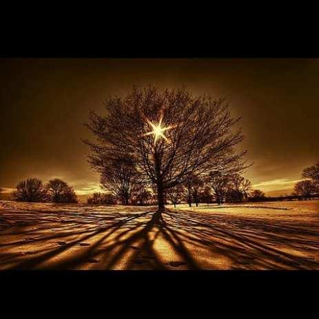 Ln_tree (2)
