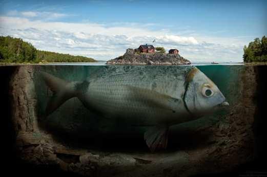Erik Johansson pesce