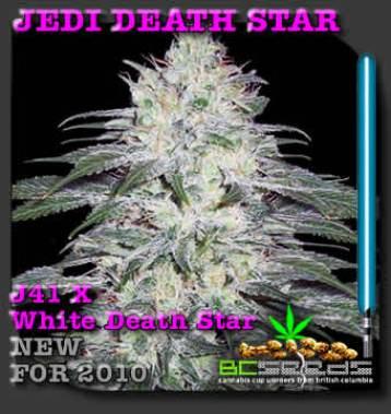 Jedi_Death_Star_Bud
