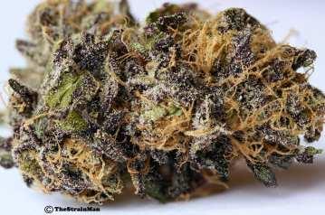 PurpleSkywalker2