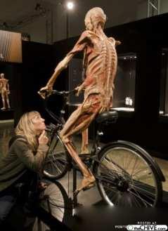 body-worlds-cyclist-15